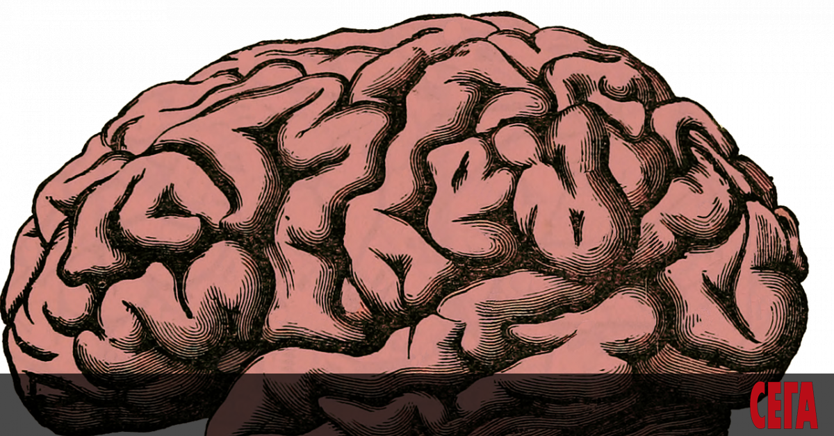 Мозъкът на съвременния човек е много по-млад, отколкото се смяташе